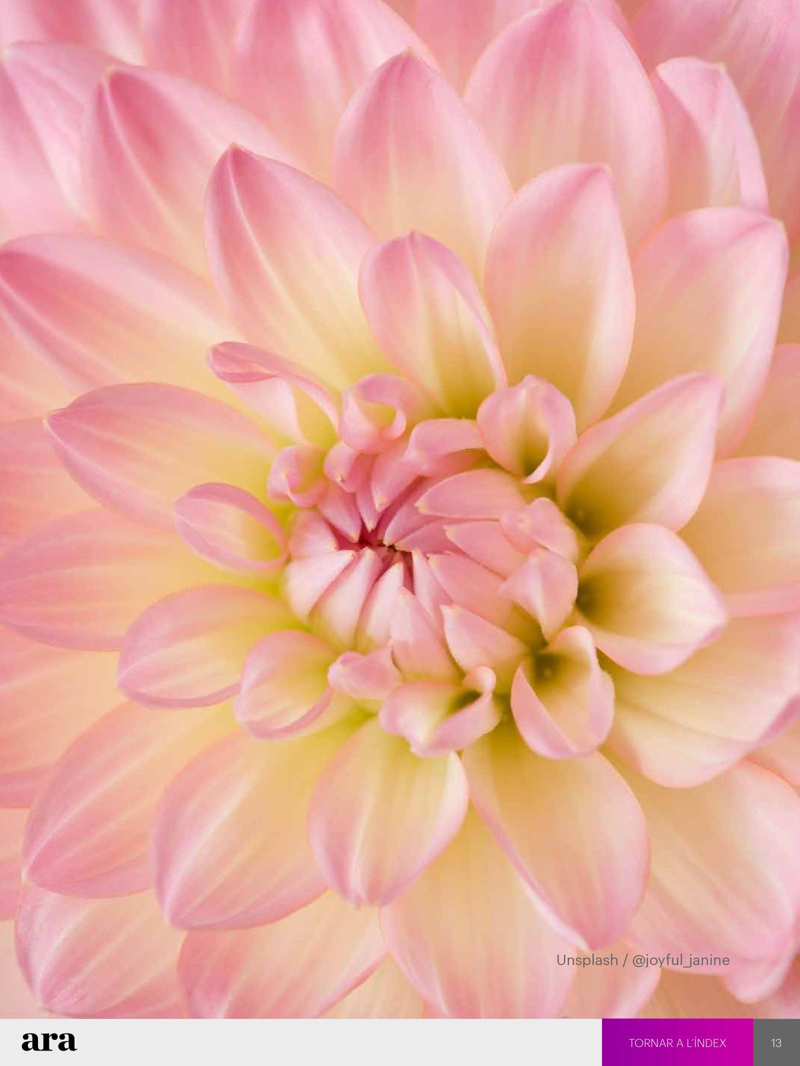 Flors de tots colors i olors 1