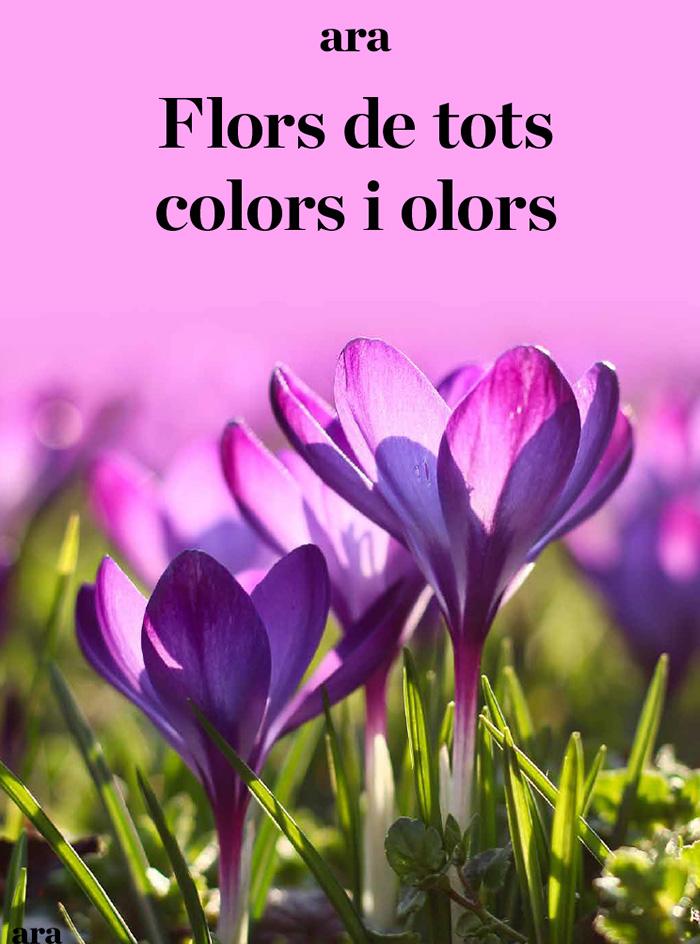 Flors de tots colors i olors