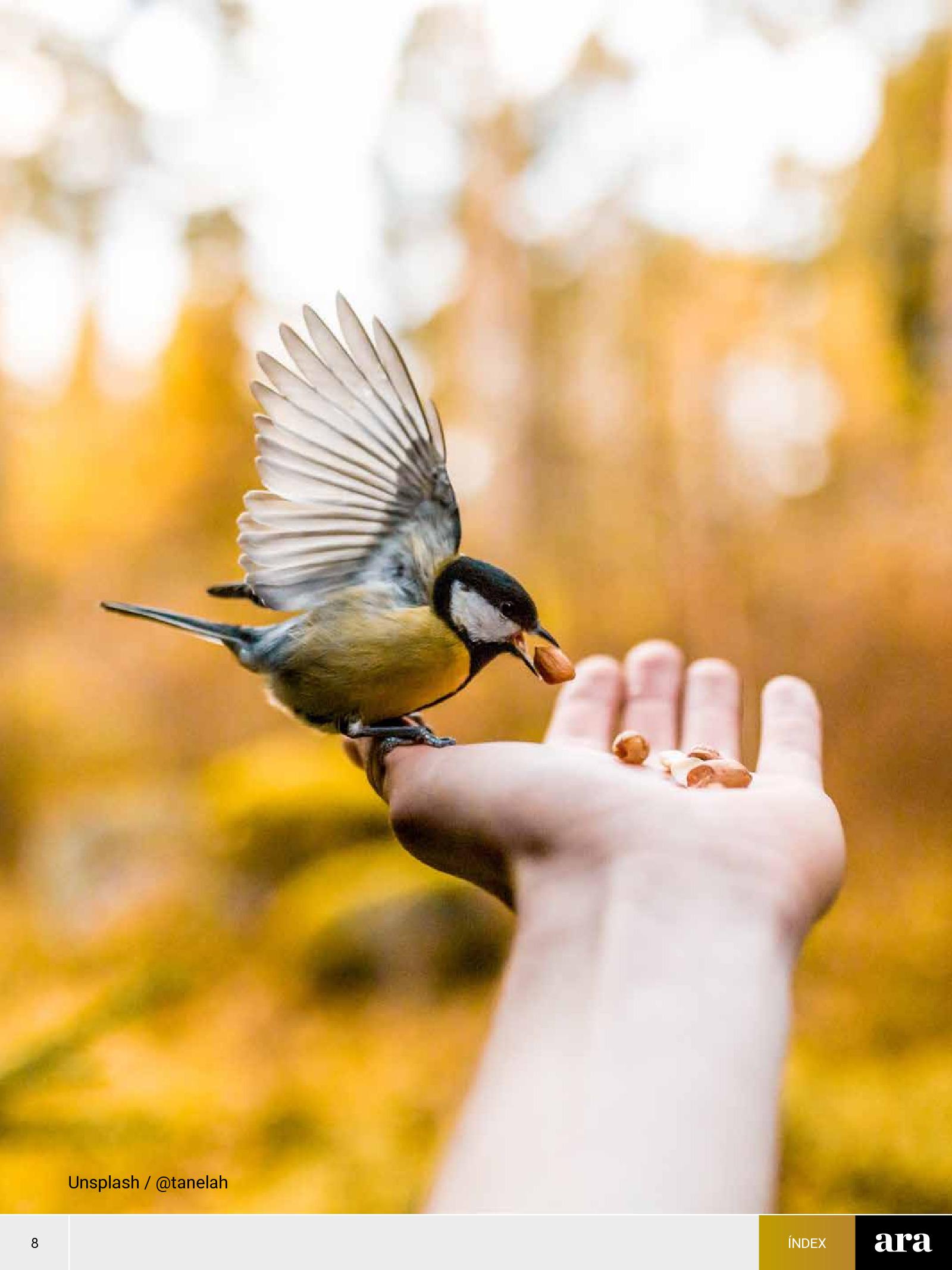 Ocells 1