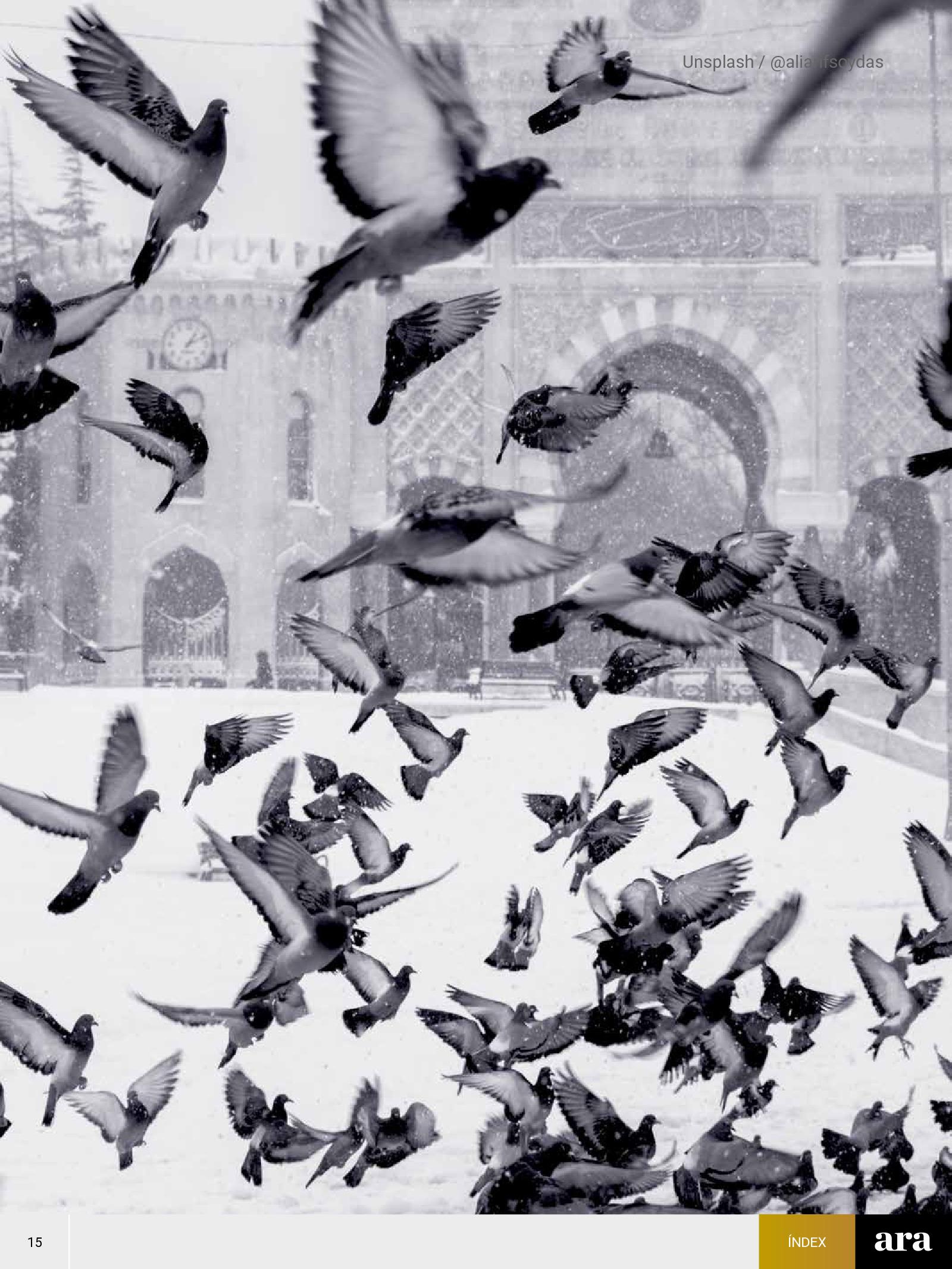 Ocells 2
