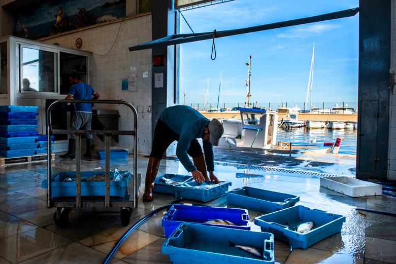 Uno de los pocos pescadores de la Cofradía de San Pedro del Pinatar que sale a pescar llegando a la lonja y preparando el pescado.