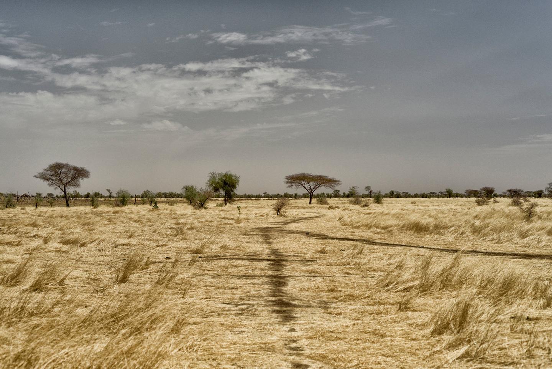 Paisatge àrid a la regió de Hodh el Chargui, amb les marques encara recents dels moviments de bestiar