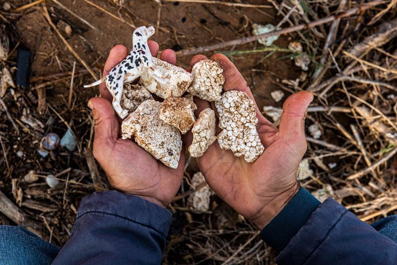 Miles de trozos de bandejas de poliestireno y otros plásticos que la DANA arrastró de los cultivos hasta la costa