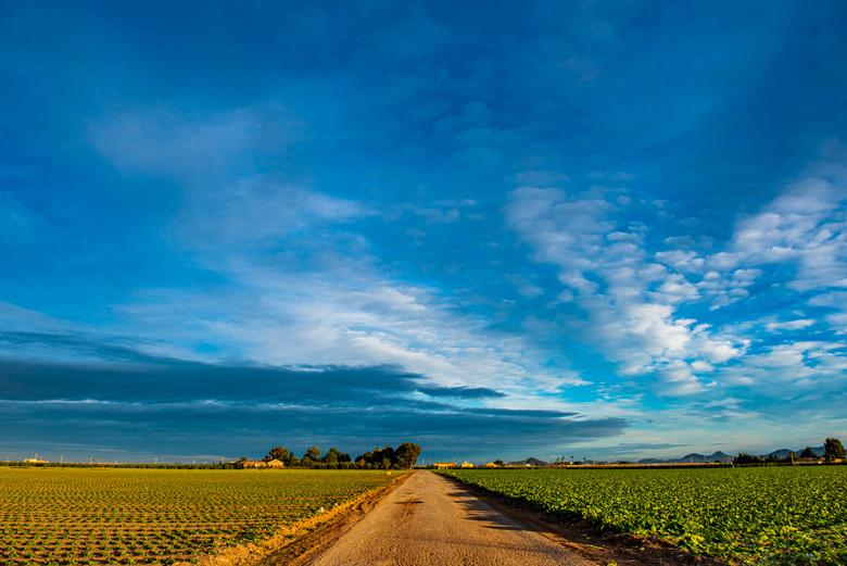 Una plantación de lechugas intensiva: a la derecha del camino, lista para cosechar; a la izquierda, apenas comenzando a crecer.