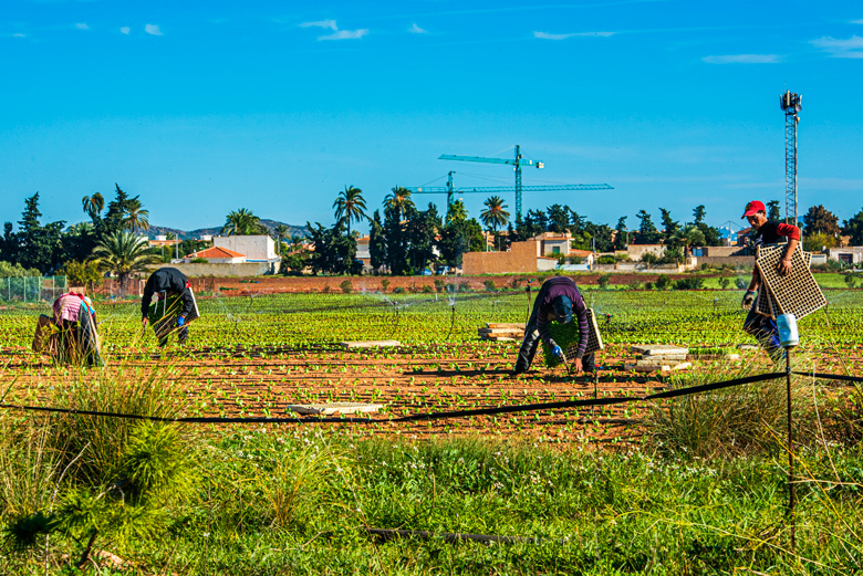 Los trabajadores de los campos son en buena parte inmigrantes